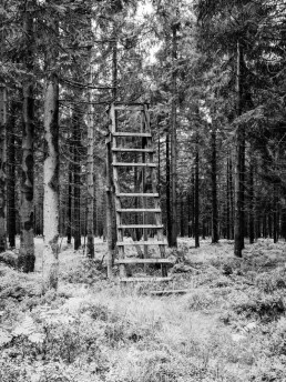 A wood ladder in the middle of the forest, in Ardennes, Belgium.