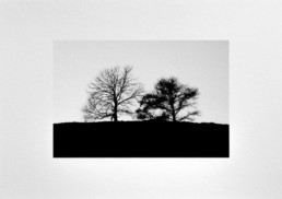 Two trees Fine Art Photography Black and White